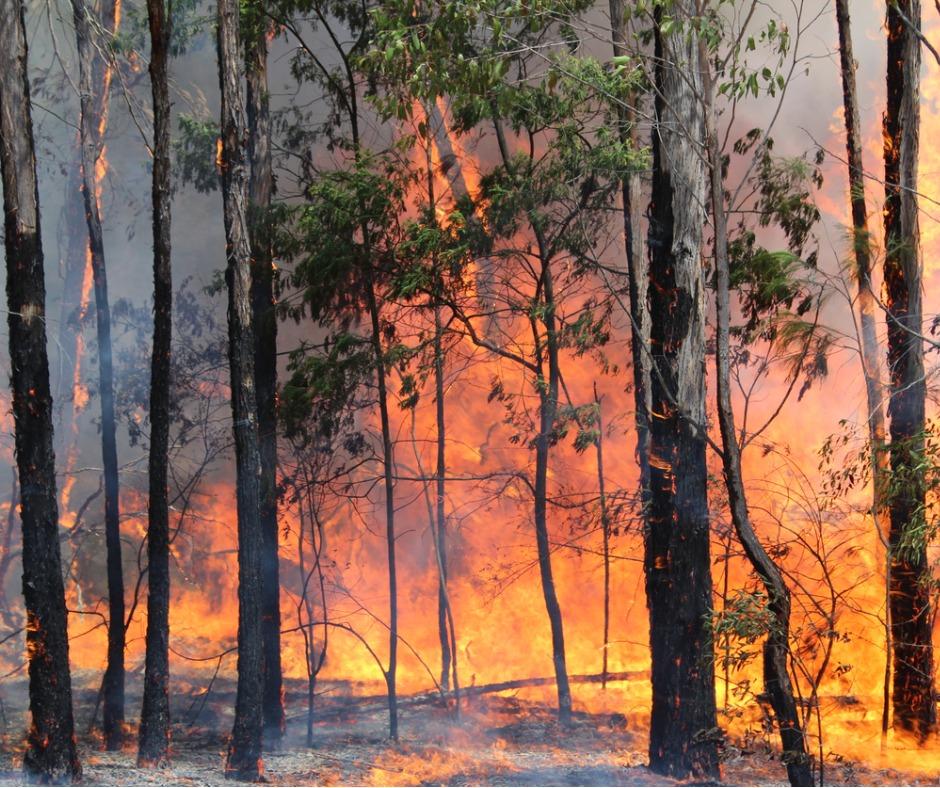Support following bushfires